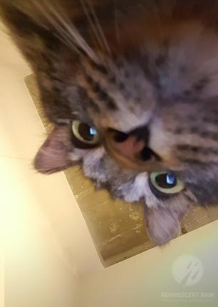 cat funny eowyn