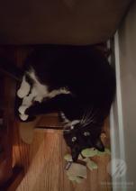 cat funny shadowfax