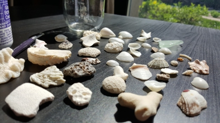 Cancun Shells 01