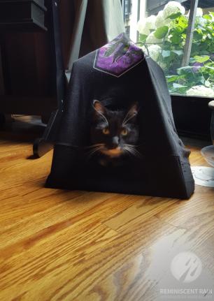 Cat tent DIY