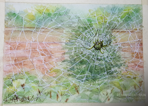 Day 6 - Spider in a web.